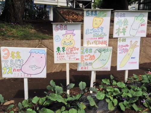 子どもたちは校庭で実際に自分たちで野菜を育て、野菜の知識を学びます。これも 食育の一環です。 (東京都文京区立青柳小学校 写真提供:前青柳小学校・現金富小学校 学校栄養職員 松丸奨先生)